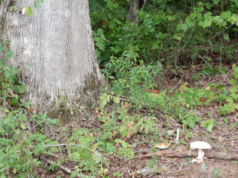 mushroom treatment